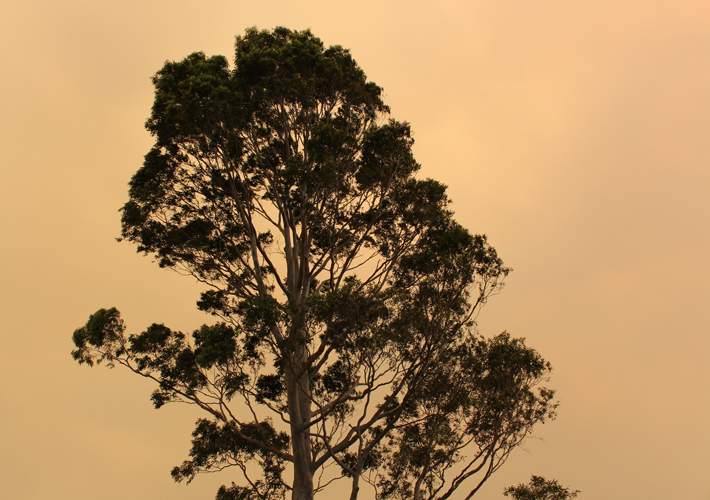 TreeArticles_Bushfires