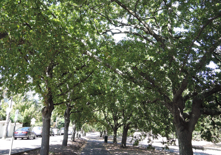 TreeManagement_CanopyDensity