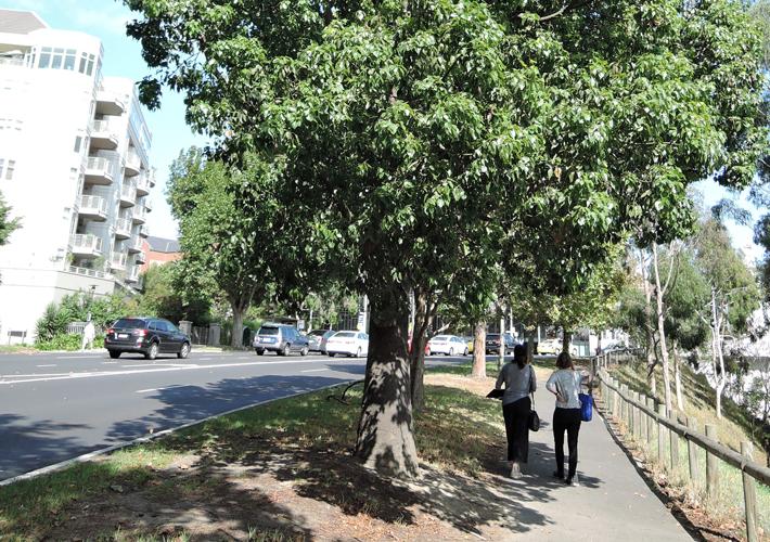 TreeManagement_RiskManagement