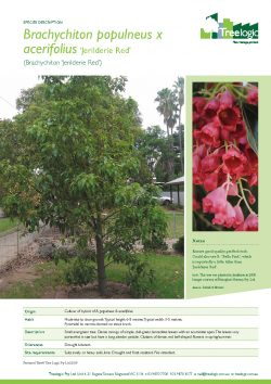 Tree Species Factsheets Treelogic